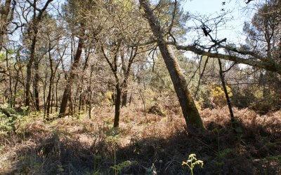 Que vive la forêt